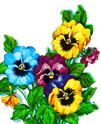 407x500 Pansies Clipart