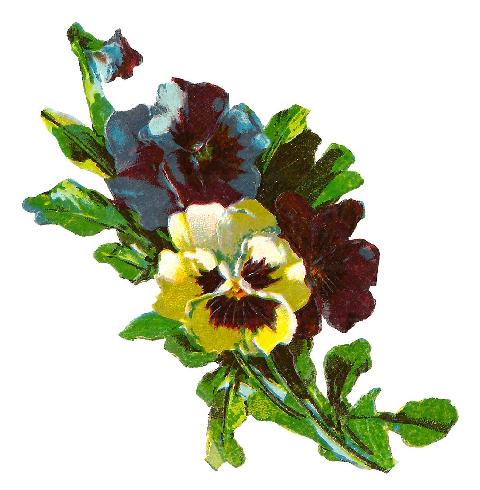 1566x1600 Antique Images Pansy Flower Artwork Image Illustration Botanical
