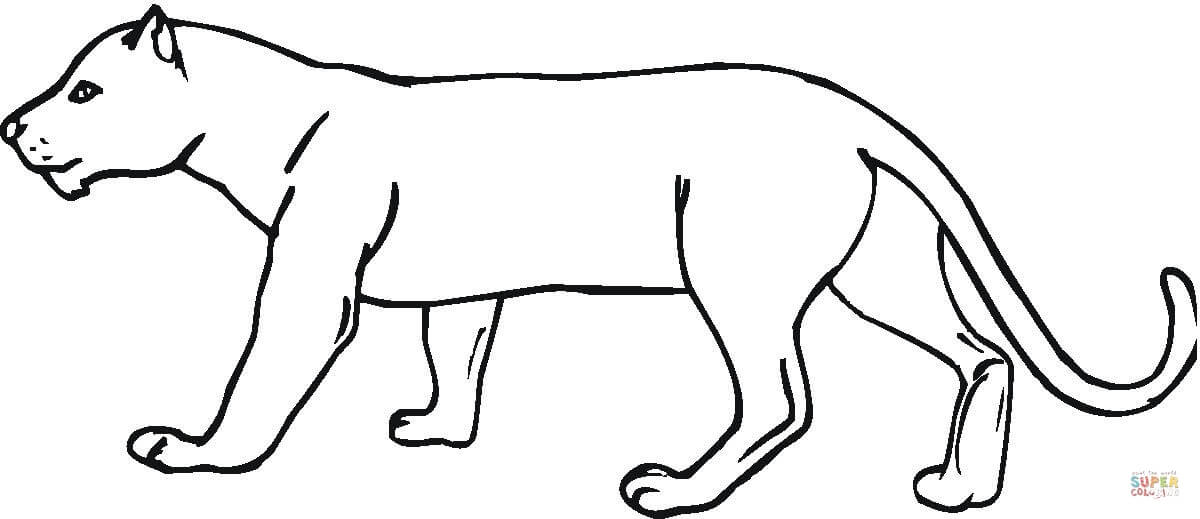 1200x519 Panther Coloring Page Free Printable Coloring Pages