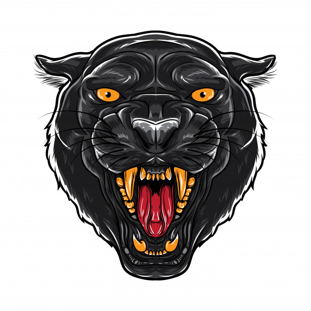 626x626 Panther Vectors, Photos And Psd Files Free Download