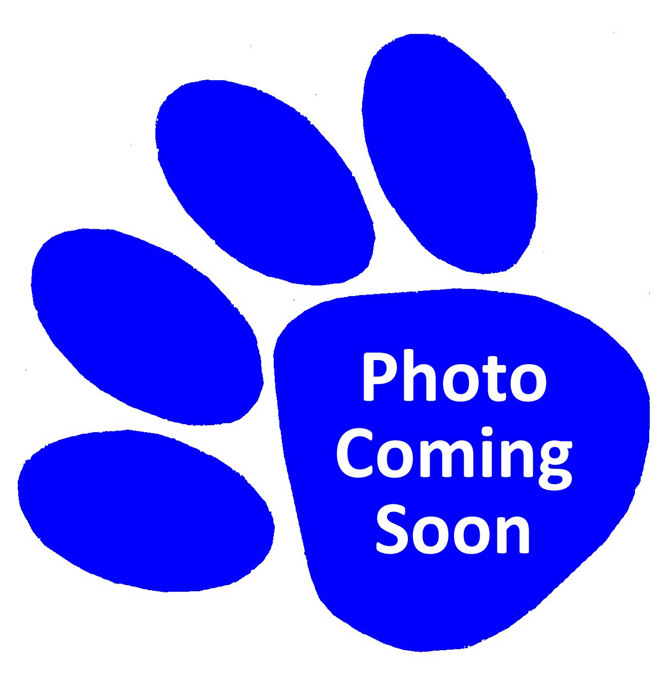 1317x1329 Panther Paw Logos