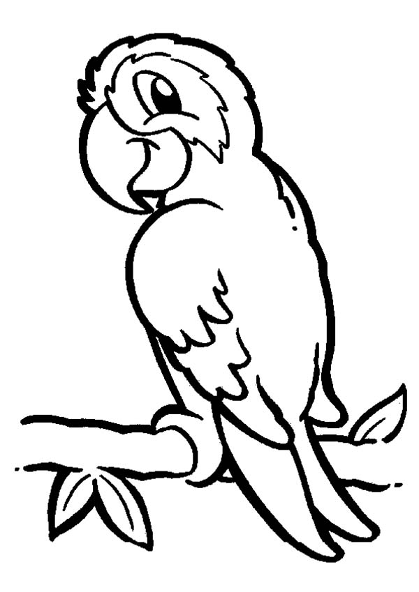 600x849 Parrot On Branch Coloring Page Stenciling