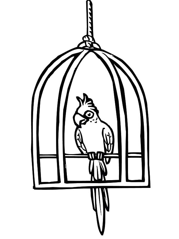 bird cage coloring pages - photo#20