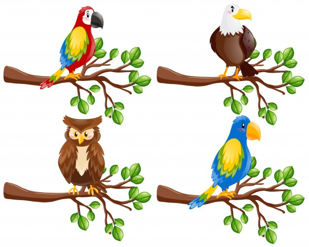 626x500 Parrot Vectors, Photos And Psd Files Free Download