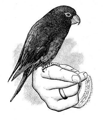 344x400 Victorian Clip Art