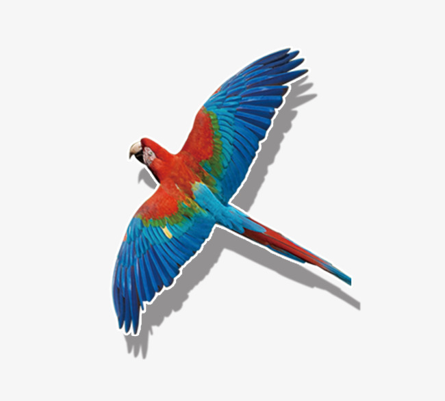 650x586 Colored Parrot Flying, Birds, Fly, Parrot Png Image For Free Download