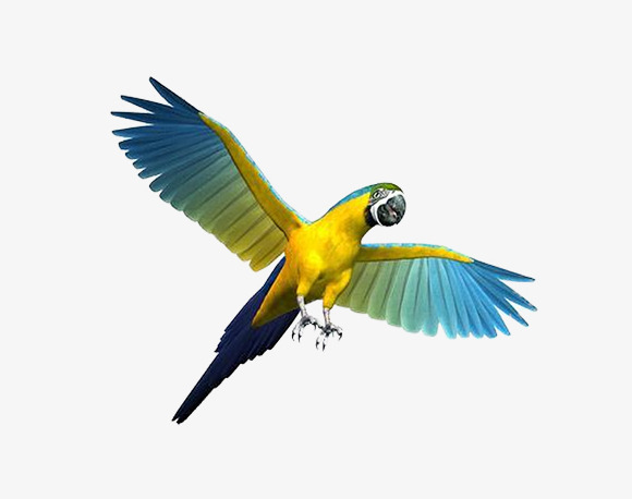 580x458 Flying Parrot Material Picture, Colorful Parrot Picture, Creative