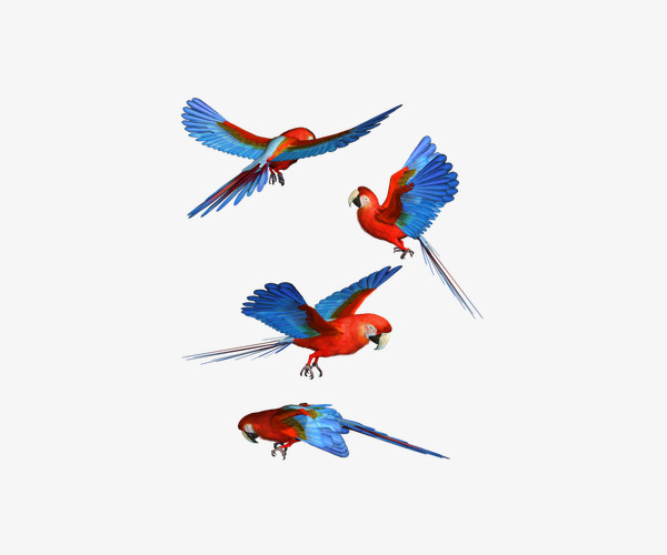 600x500 Colorful Parrot Flying, Flight, Parrot, Colorful Png Image