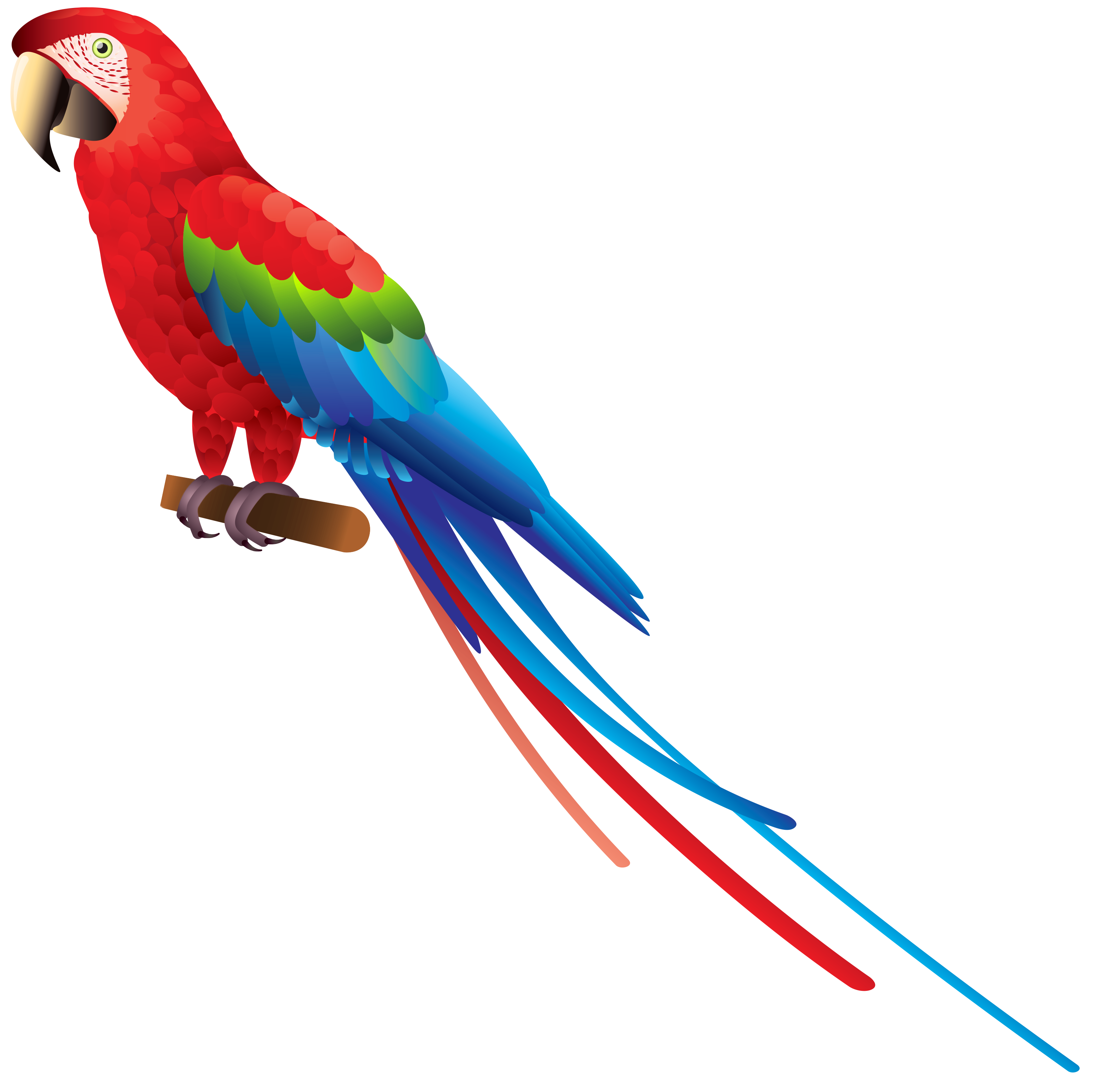 Parrots Clipart Free Download Best On Parrot Origamiorigami Macaw Parrotorigami Diagram 3296x3282 Colourful Bird 550x447 Red