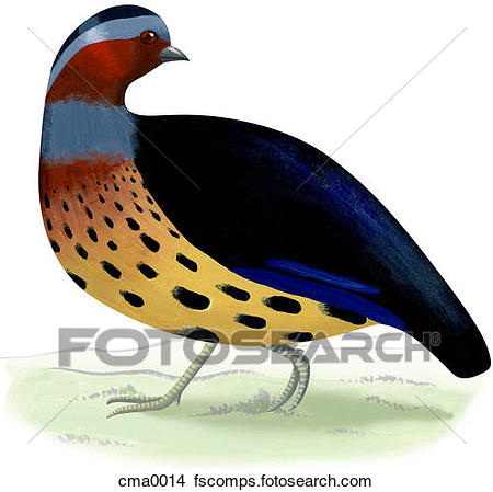 450x449 Drawings Of A Bamboo Partridge Cma0014