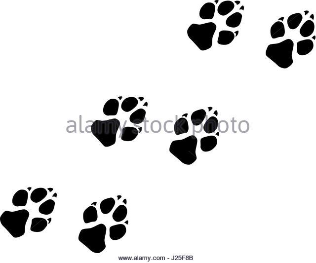 640x533 Paw Prints Illustration Dog Stock Photos Amp Paw Prints Illustration