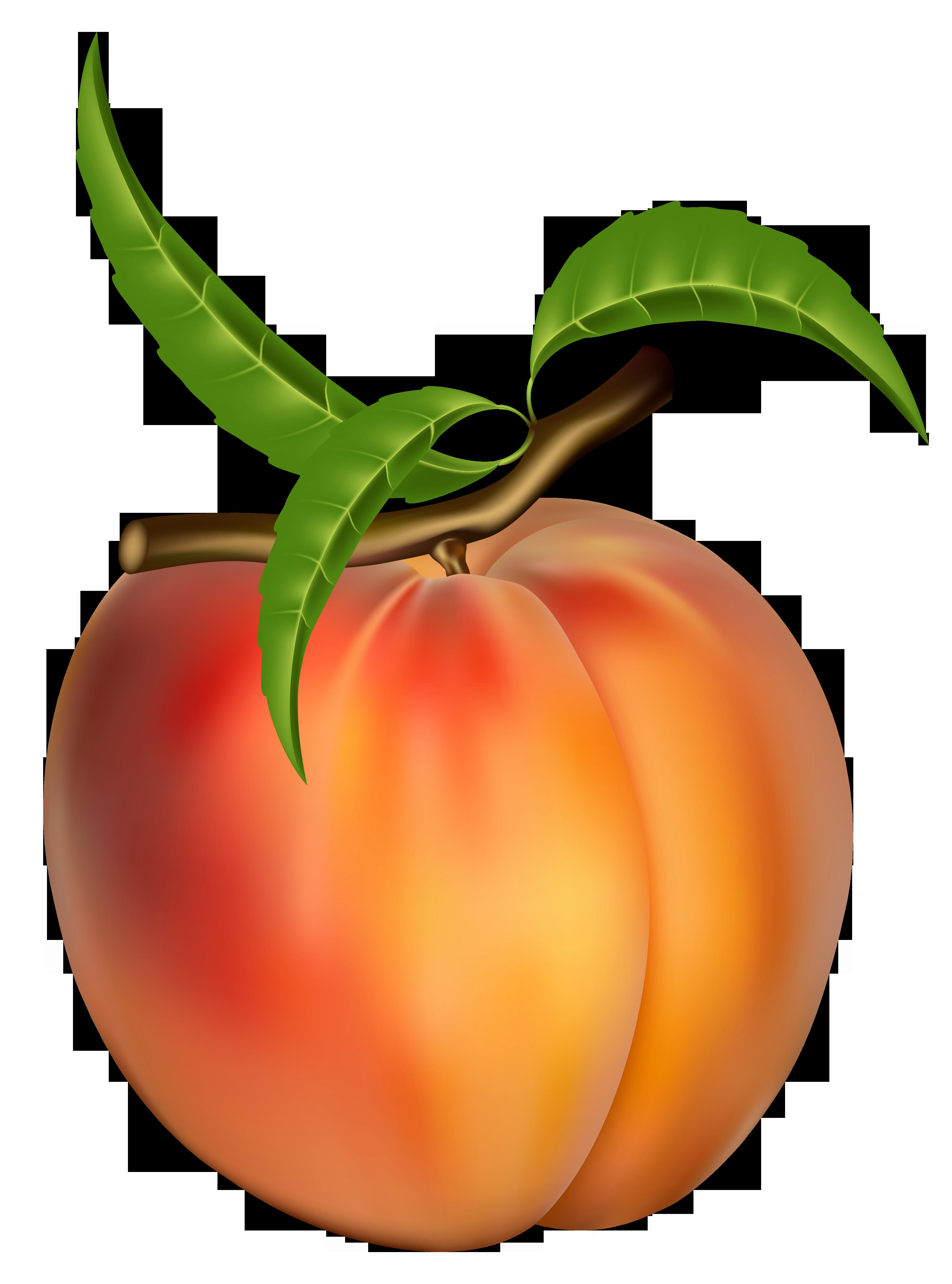 3222x4344 Peach Clip Art Free