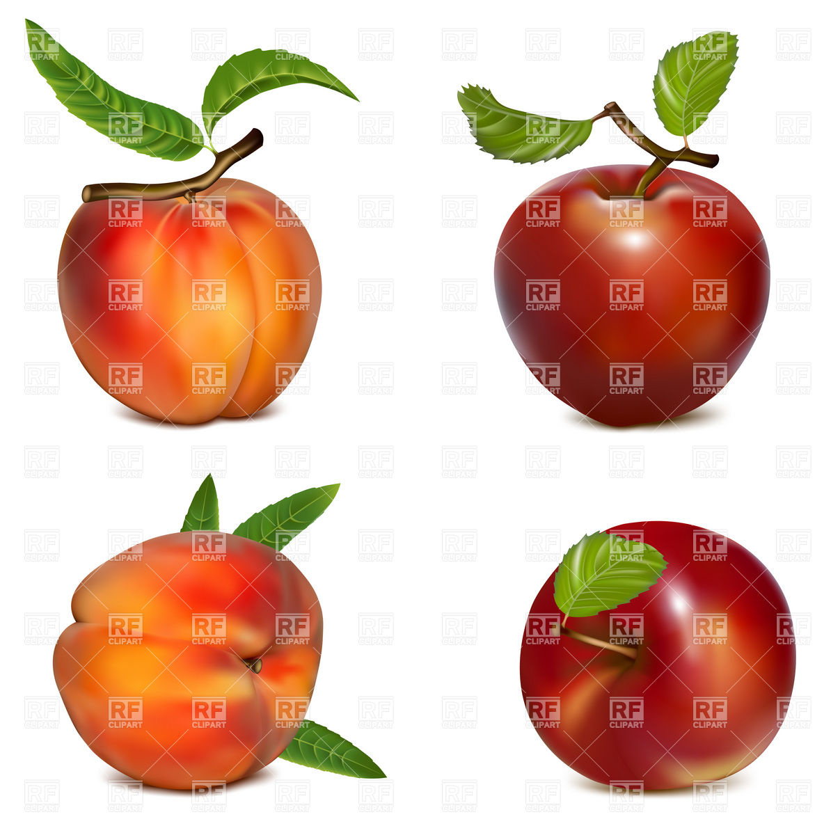 1194x1200 Apples And Peaches Royalty Free Vector Clip Art Image