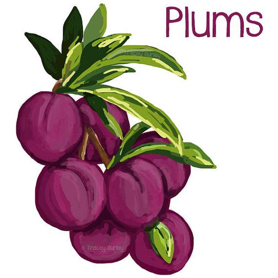 570x570 Peach Clipart Plum