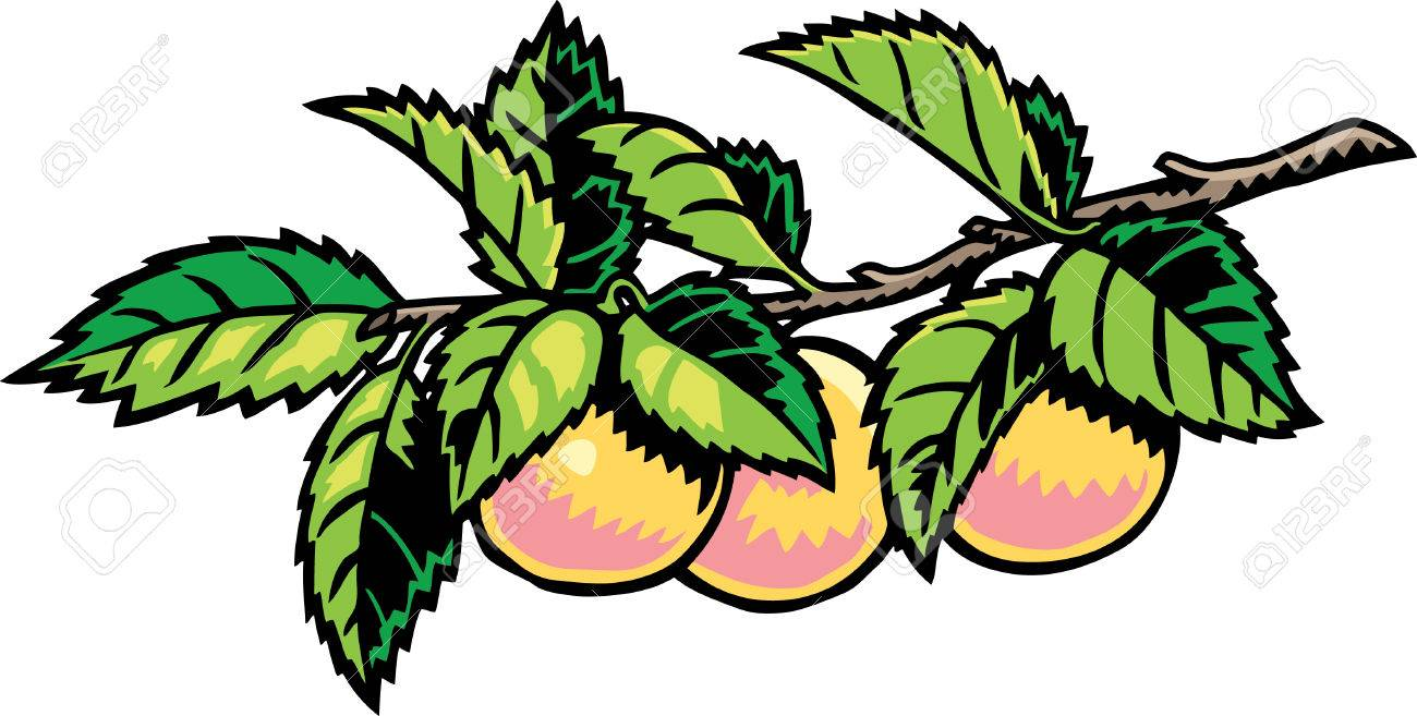 1300x657 Peach Tree Royalty Free Cliparts, Vectors, And Stock Illustration