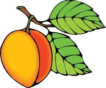 350x293 Peach Clipart Fruit Outline