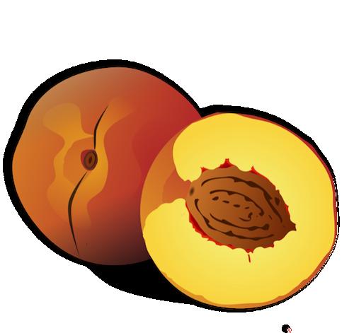 500x471 Peach Clipart Fruit