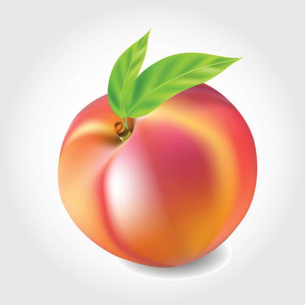 612x612 Peach Clipart Single Fruit