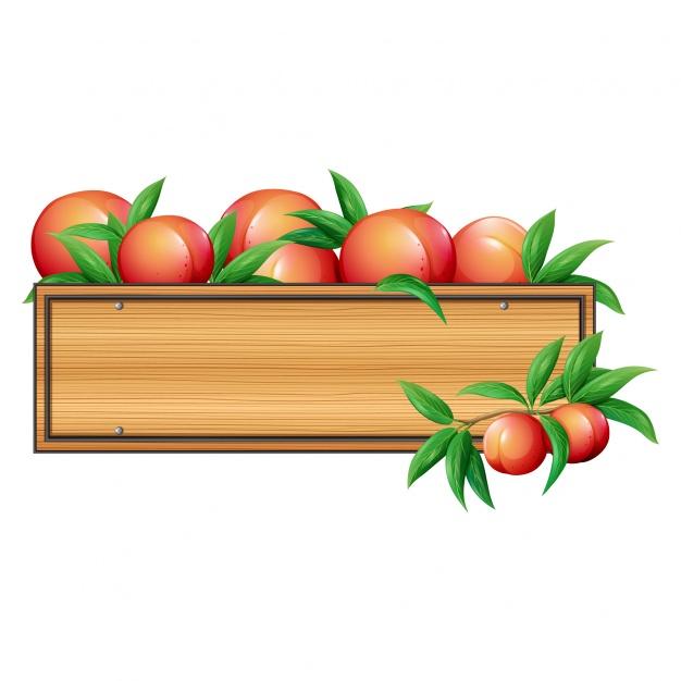 626x626 Peaches Box Design Vector Free Download