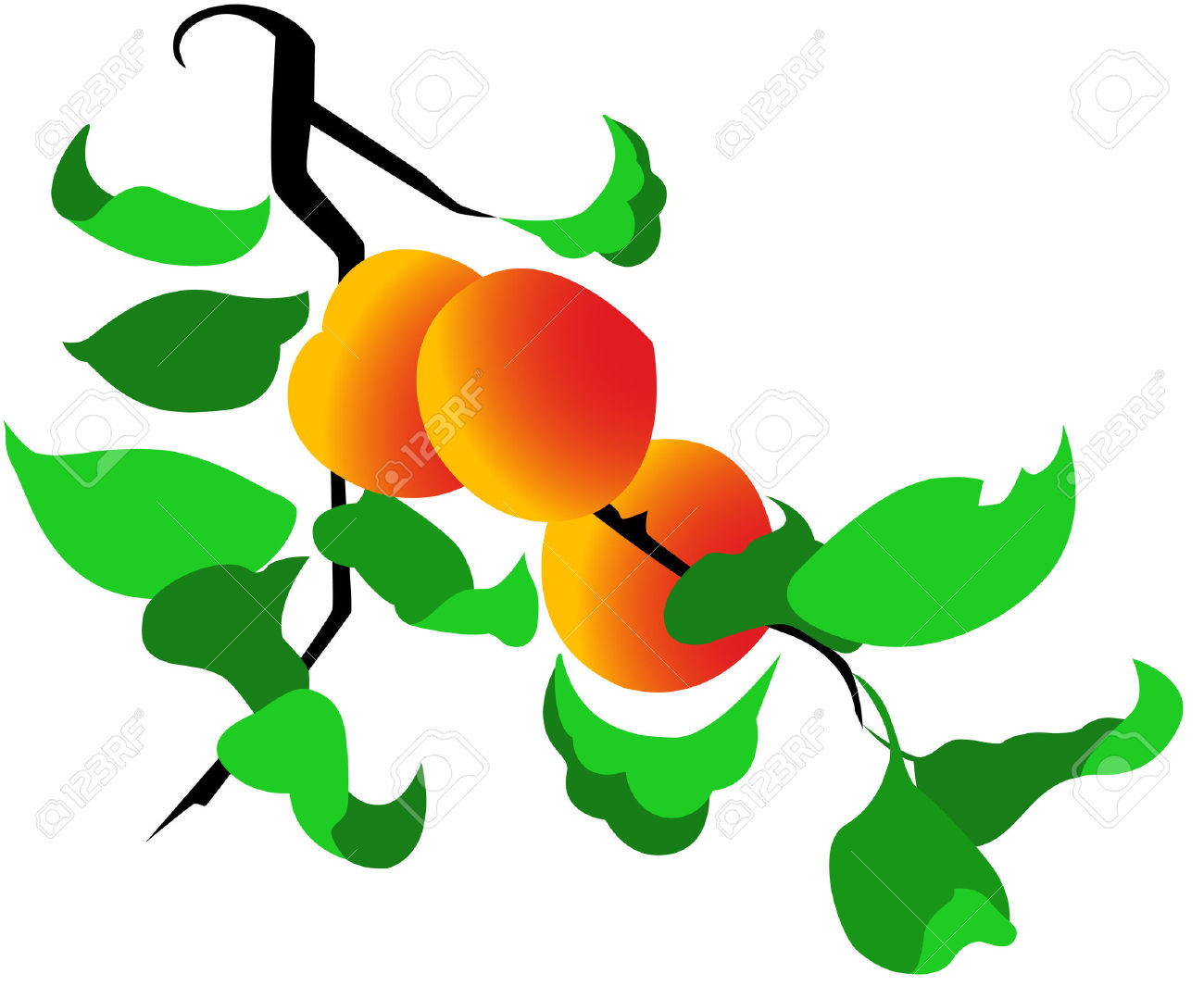 1300x1065 Peach Clipart Peach Tree