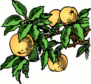 300x278 Peaches Clip Art Download