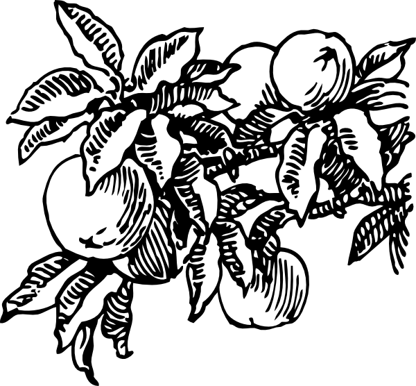 600x556 Peaches Clip Art Free Vector 4vector