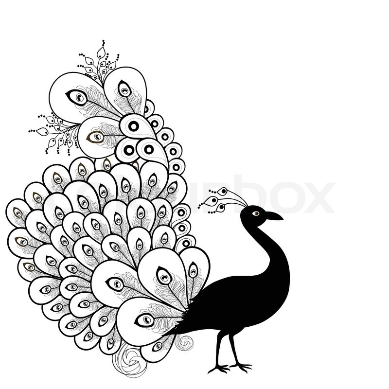Peacock Black And White Free Download Best Peacock Black And White