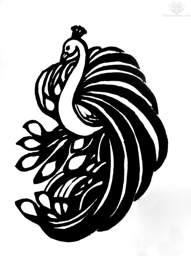 736x985 21 Best Peacock Tattoo Images Drawing, Draw