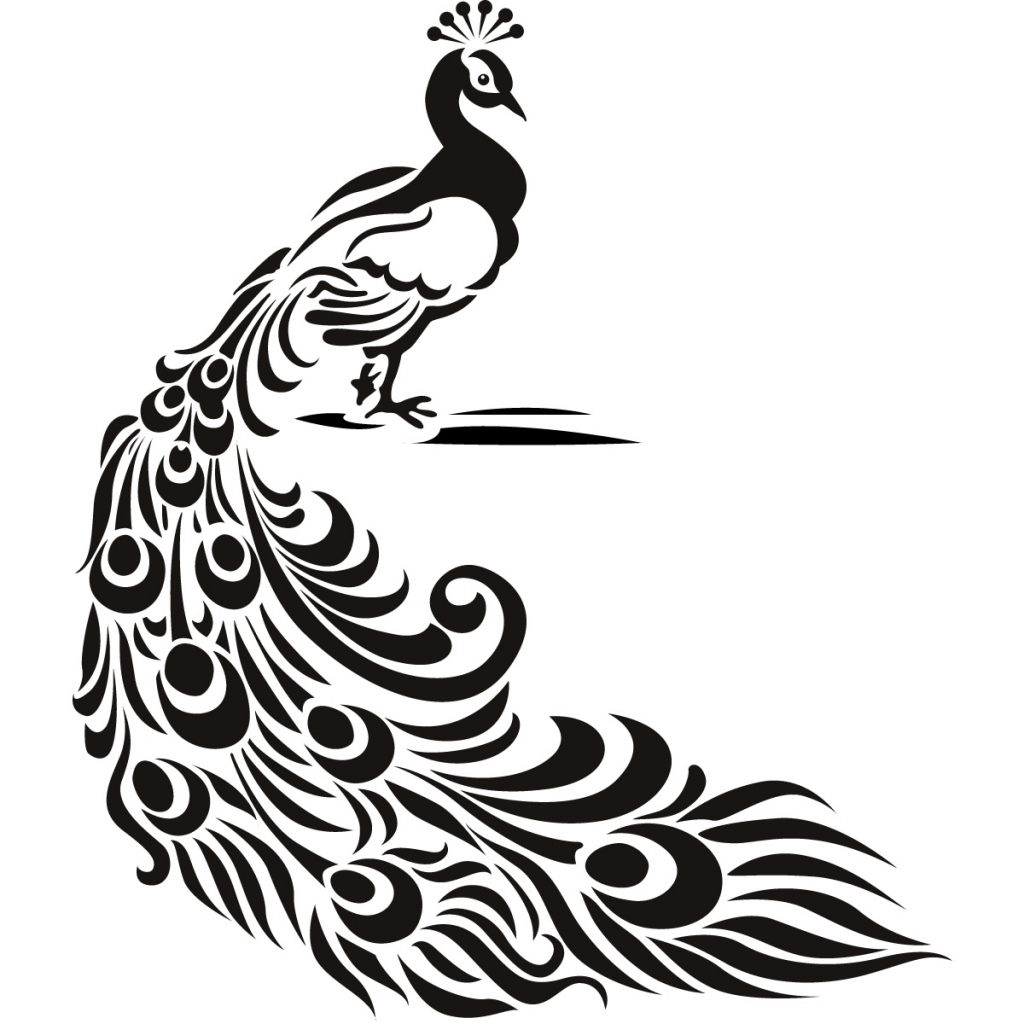 Line Drawing Of Peacock : Peacock drawing free download best on