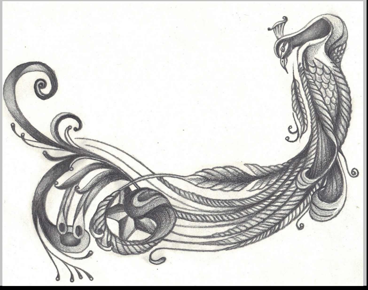 1566x1234 Peacock Pencil Drawings Drawing Examples And Drawing Techniques