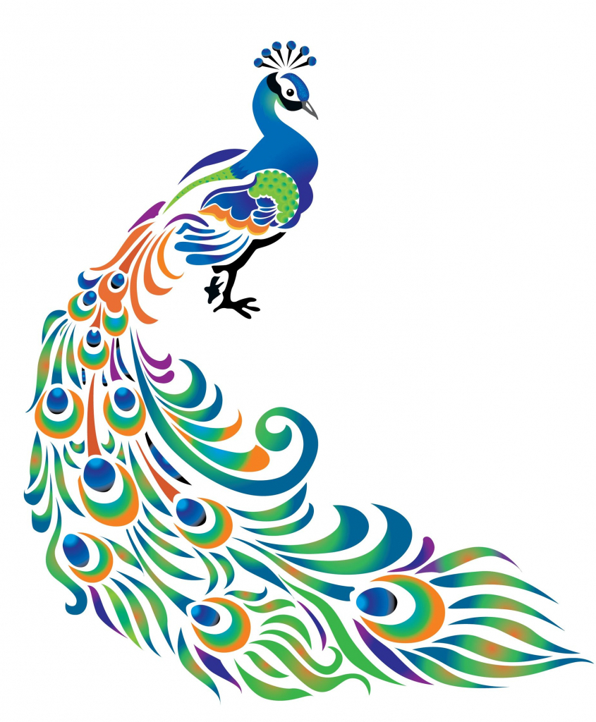 845x1024 Simple Peacock Feather Drawing Basic Feather Outline Clipart