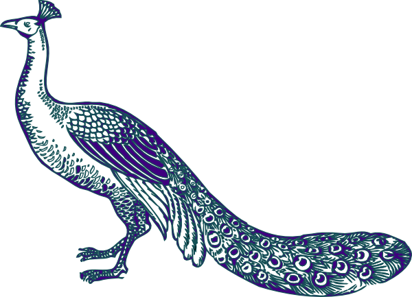 600x433 Peacock Clipart Purple Peacock