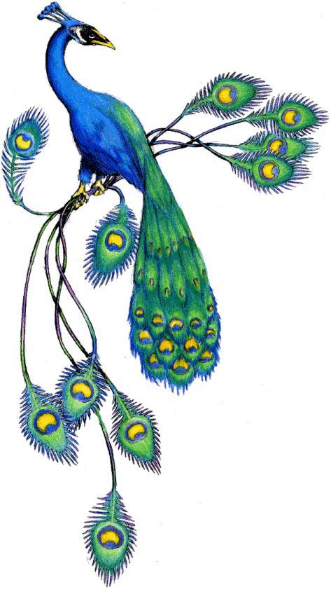 473x845 30 Best Peacock Graphics Images Duke, Paint