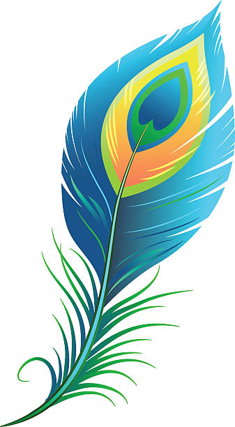 337x612 Single Clipart Peacock Feather