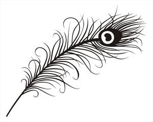 300x240 Search Photos Peacock Eye