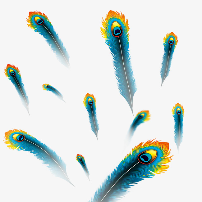650x651 Floating Peacock Feathers, Feather, Peacock Feather, Float Png