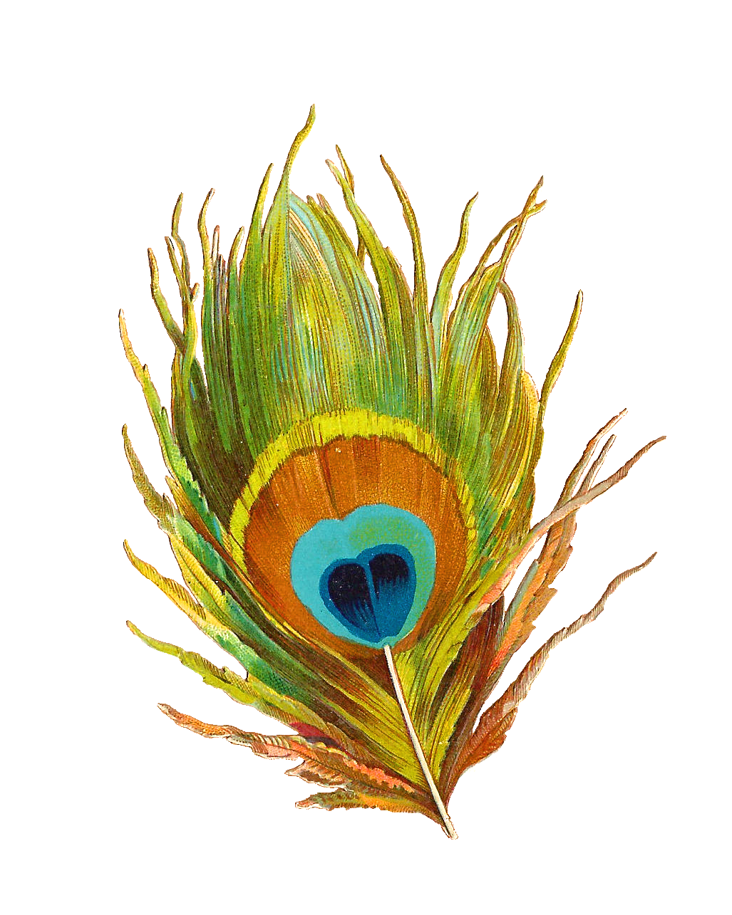 1027x1285 Krishna Clipart Peacock Feather