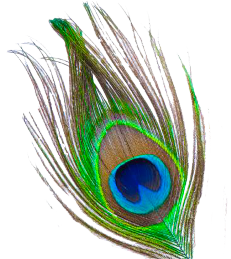800x897 Peacock Feather Png Transparent Images Png All