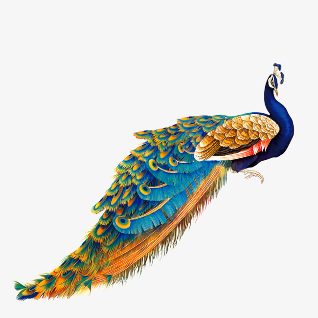 650x651 Color Golden Peacock, Color, Peacock, Blue Feather Png Image