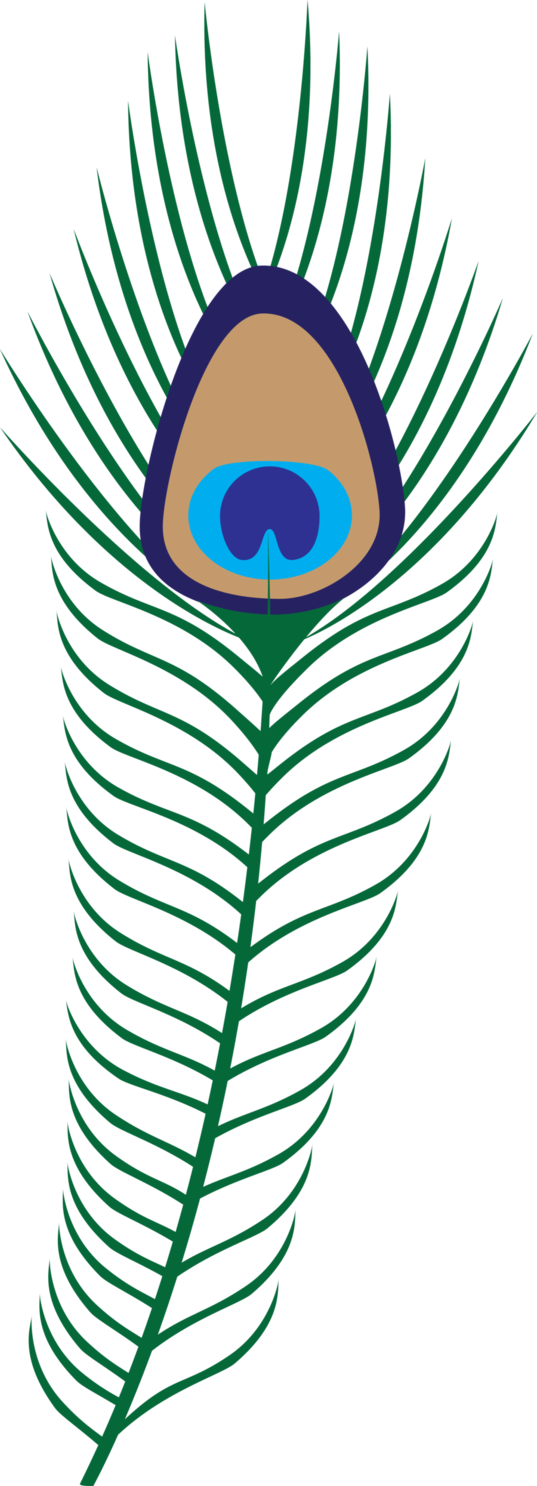 537x1486 Free Peacock Feather Clip Art