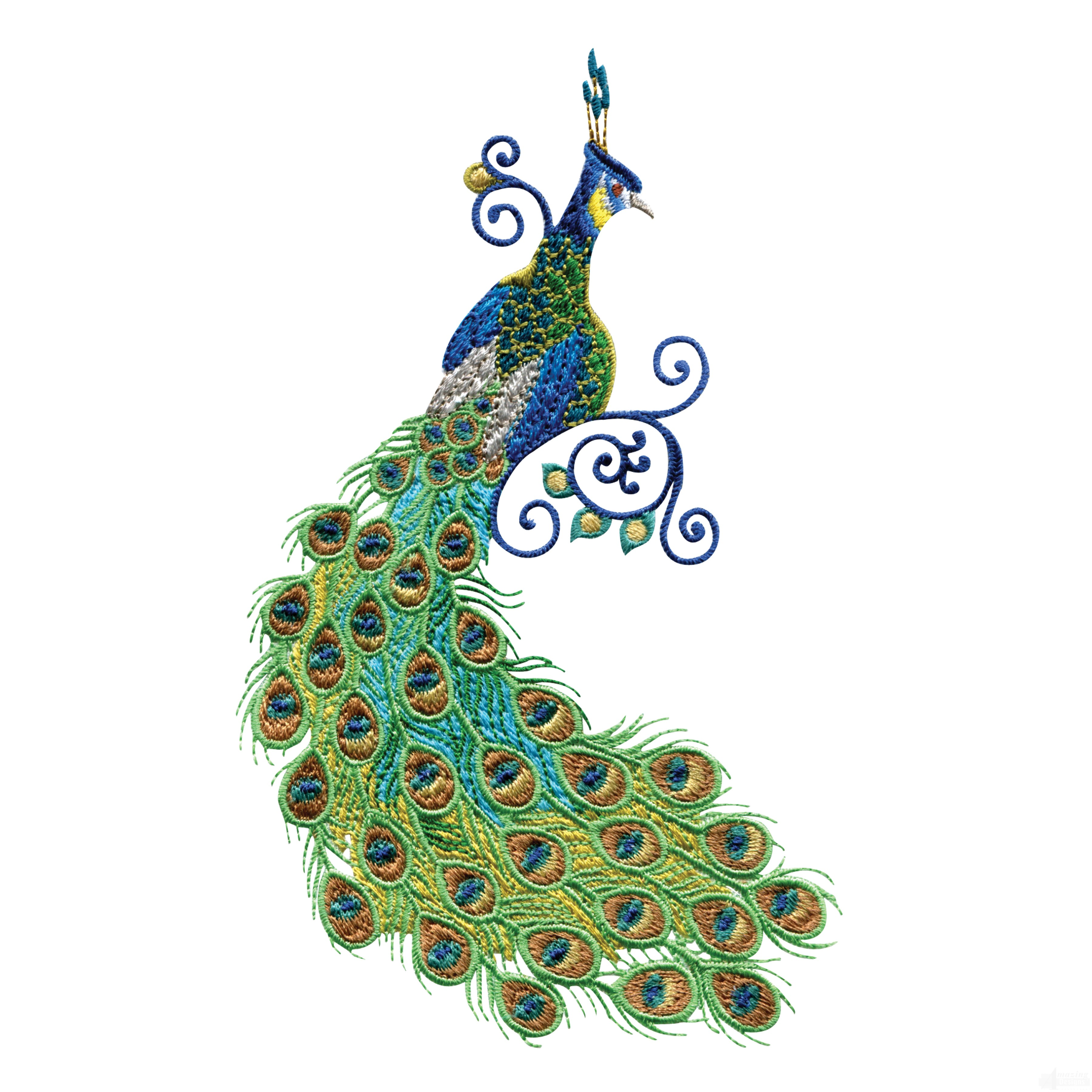 3600x3600 Peacock Pictures