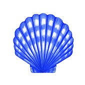 170x170 Oyster Seashell Clipart, Explore Pictures