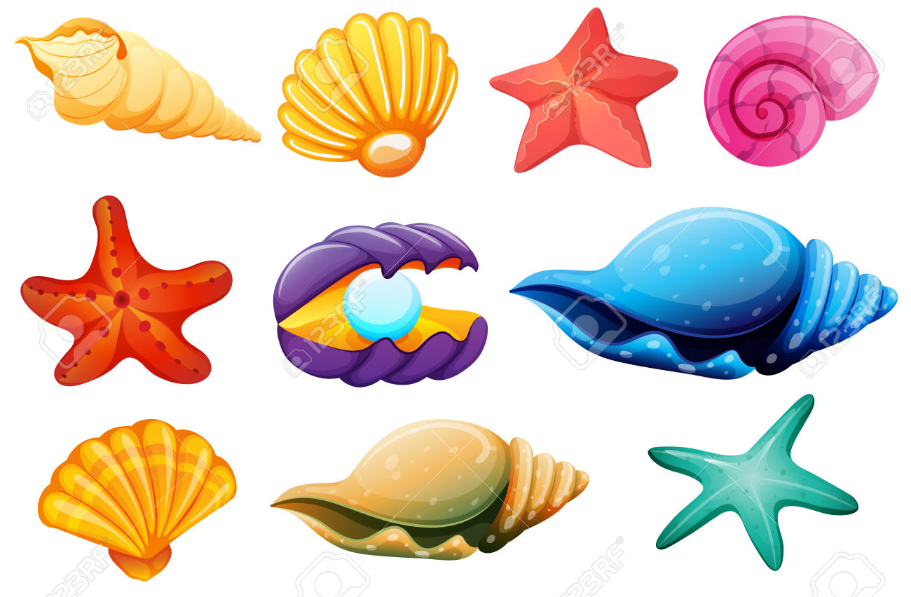 1300x852 Pearl Seashell Clipart, Explore Pictures