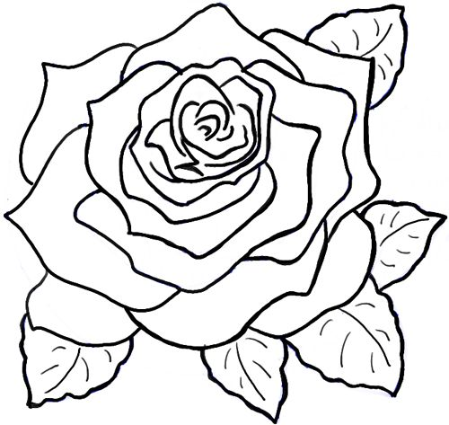 500x473 How To Draw A Rose