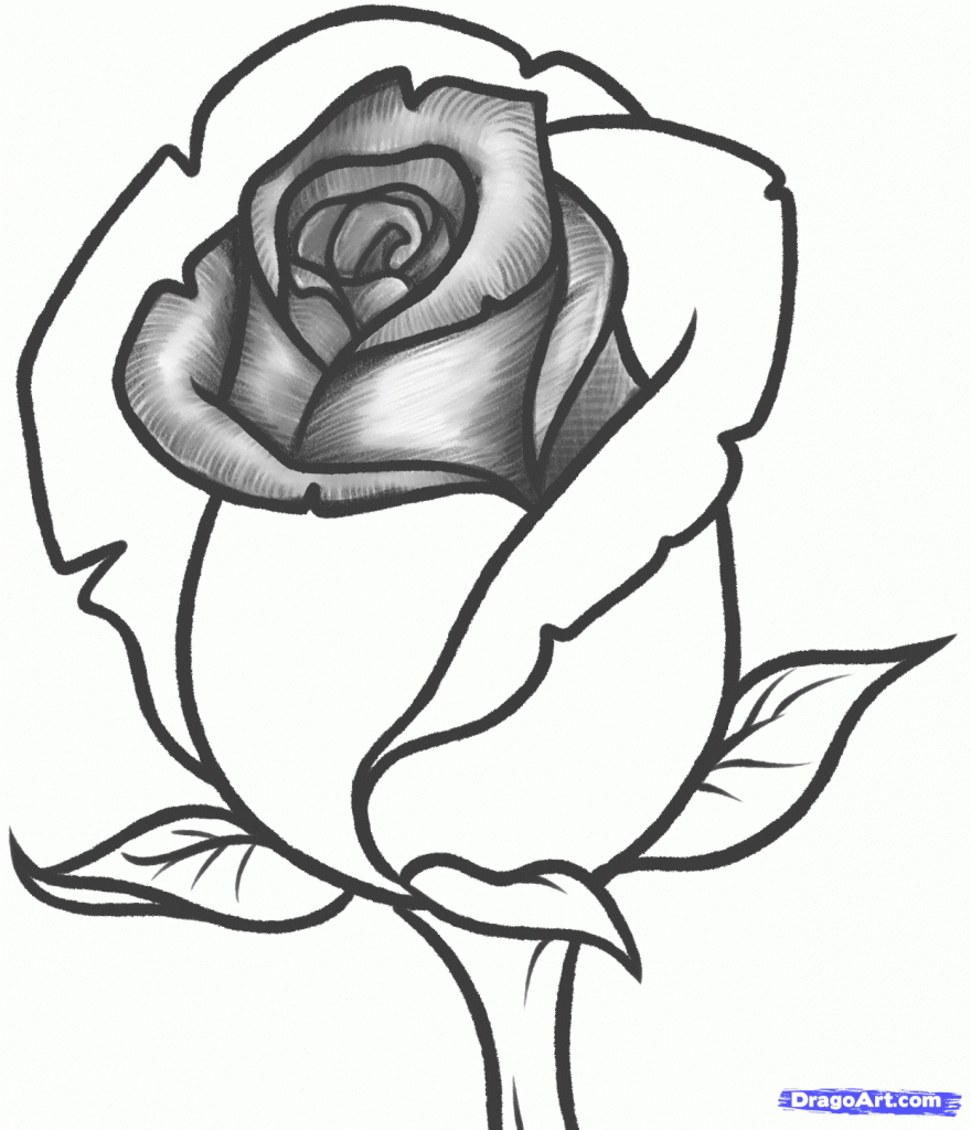 880x1024 Pencil Drawing Images Of Roses Heart And Rose Drawings In Pencil