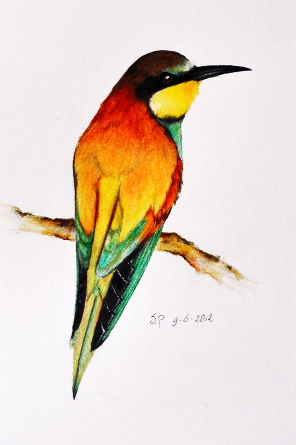 colour pencil sketch of nature max installer