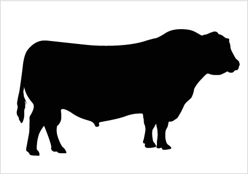 501x352 Cattle Clipart Silhouette