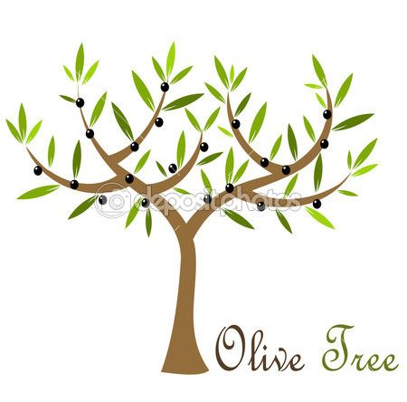 Photo Of Olive Branch Clipart