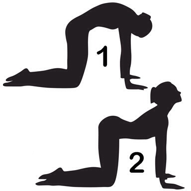 384x384 Stretch Of The Week Cat Cow Pose Physical Therapy Of Milwaukee