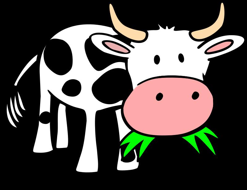 800x615 Cows Cartoon Collection